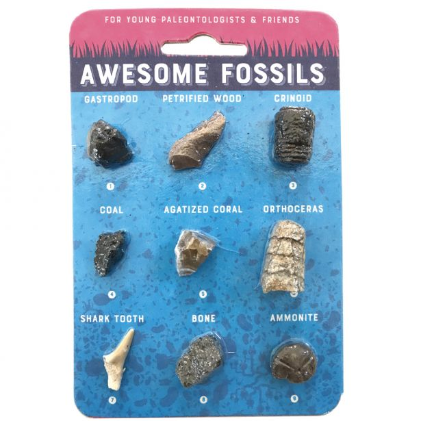 CC: AWESOME FOSSIL CARD