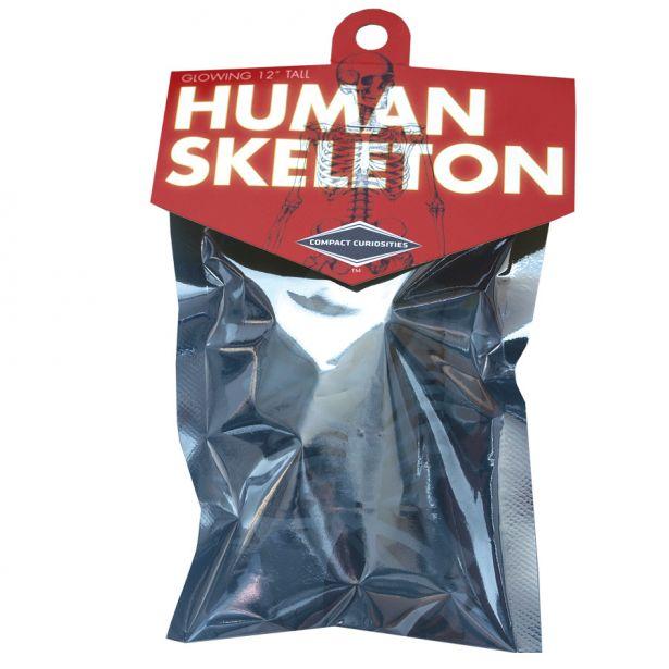 cc: human skeleton: copernicus toys, Skeleton